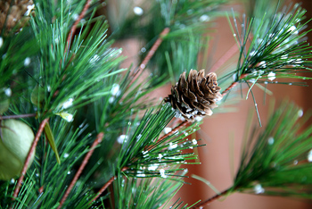 Guide Available For Finding Christmas Tree