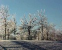 Ice On Trees (RG)