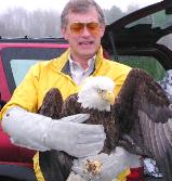 injured Eagle Has Now Been Euthanized