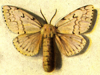 Spraying This Month To Fight Gypsy Moth
