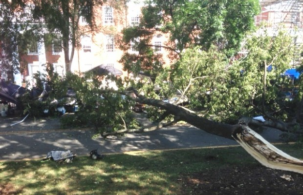 Limb Falls From Rotting Tree Injuring Several At UVA