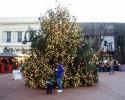 Christmas Tree Downtown 2006