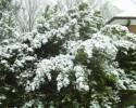 Snowy 1140 032711