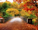 Autumn-Wallpaper-autumn-35867750-1280-800